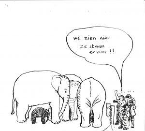 aad wieman olifant